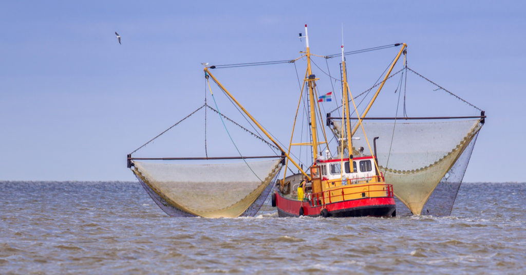 fishing permits for shrimp